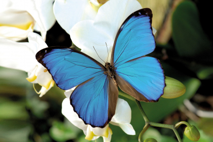 crédit photo : jardin des papillons