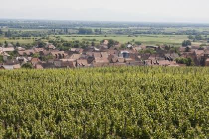 La promenade du Grand Cru Steinert, Pays de Rouffach, Vignobles et Châteaux, Haut-Rhin, Alsace (Pragma-SCF)