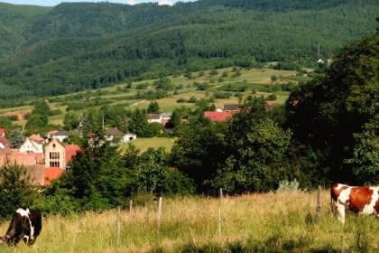 Le sentier des sols, Pays de Rouffach, Vignobles et Châteaux, Haut-Rhin, Alsace