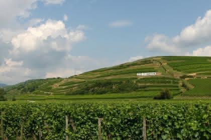 Domaine Muré - Clos Saint-Landelin, Rouffach, Pays de Rouffach, Vignobles et Châteaux, Haut-Rhin, Alsace